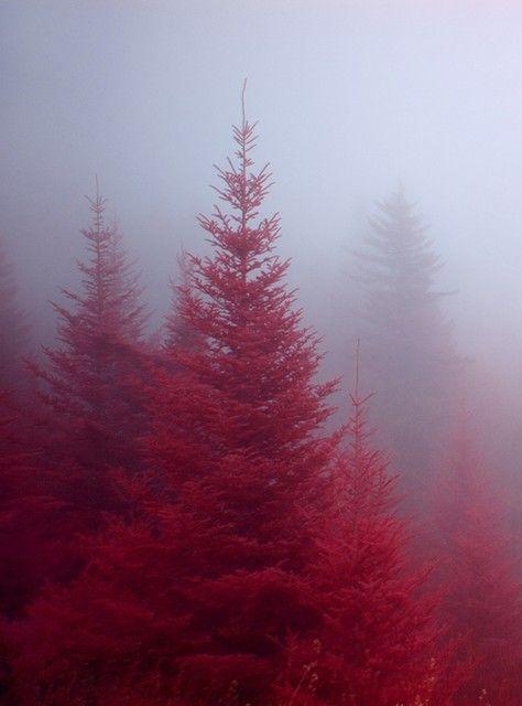 röd gran